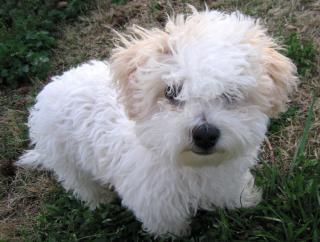 Responsible dog breeder