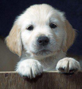 Run, Spot, Run: The ethics of keeping pets