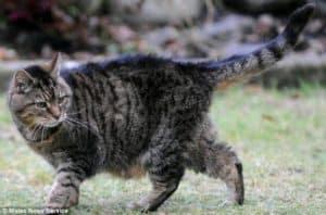 Senior cats health needs