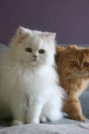 Snowy and Hazy, (image via Wikepedia)