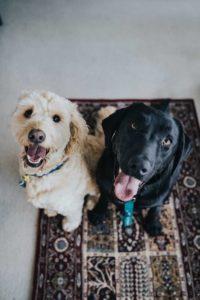 Dog welfare worries