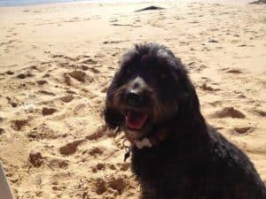 Molly smiling at beach