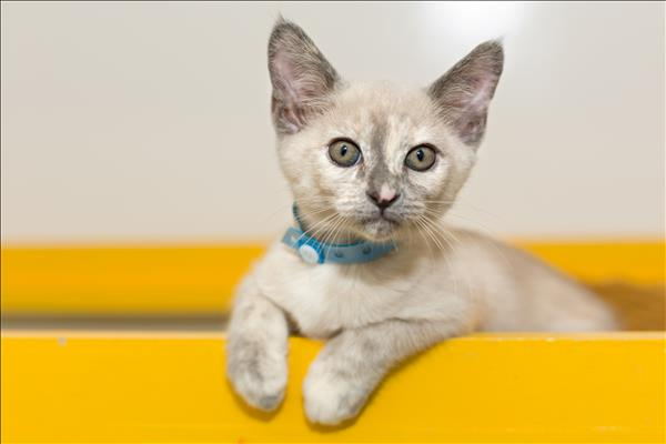 Arabella awl goldcoast pets4life for Jackson galaxy cat toys australia