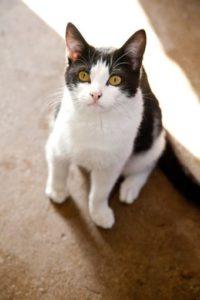 Adopt a cat meet Jacci