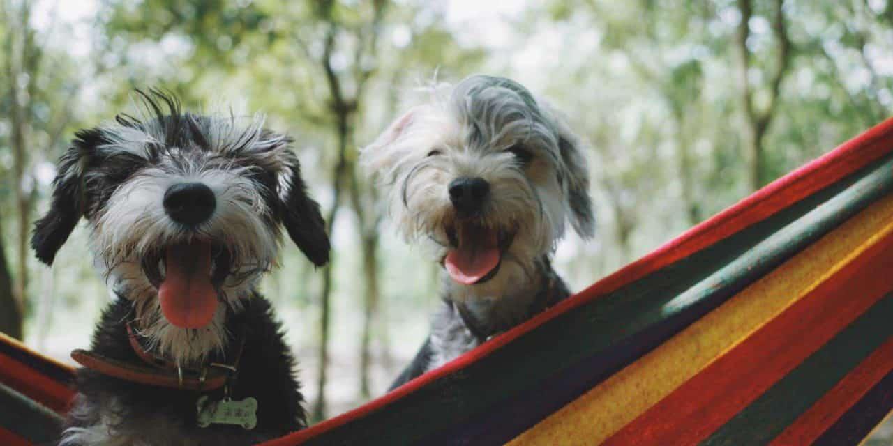 Pet mental health, is your pet happy?