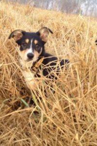 Farmer Dave's dog, Matilda