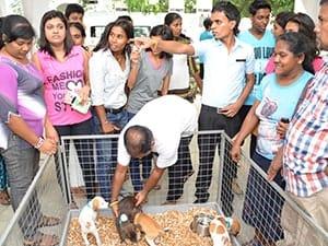 Sri Lankan street dogs