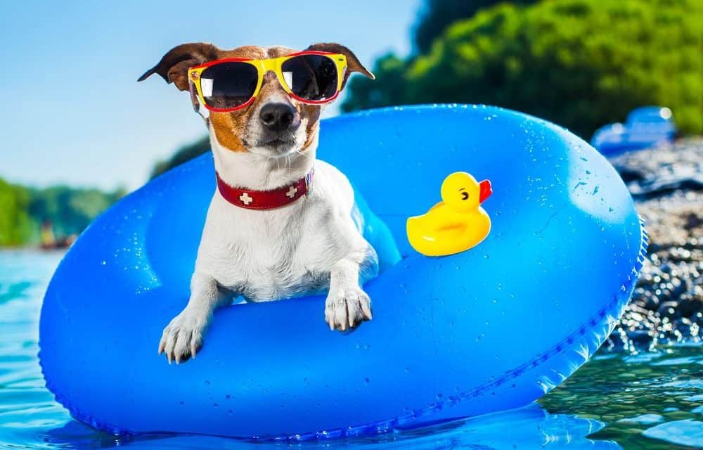 Keep pets cool and safe in summer
