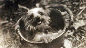 Smoky the war dog