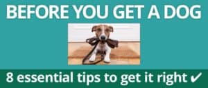 Before you get a dog - 8 essential tips to get it right