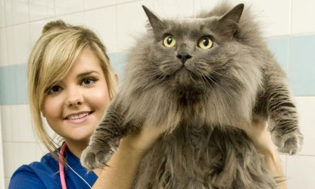 Pet obesity crisis fuelled by takeaway and alcohol