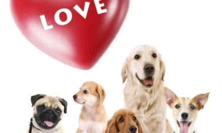 Treat your cat and dog on Valentine's Day