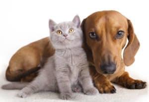 Problem with pets Pets4Life survey