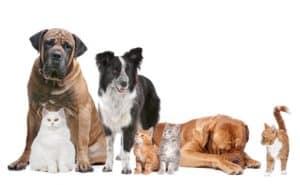 9 tips for choosing pet insurance