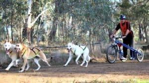 Sledding in Australia