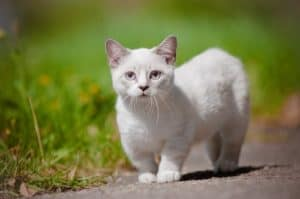 12 trendy cat mutations Munchkin
