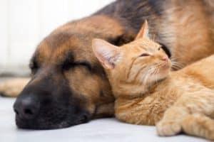 3 ways to calm an anxious pet