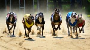 Mike Baird backs down on greyhound ban