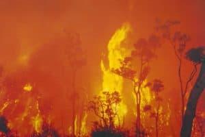 Prepare your pets bushfires