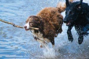 dog friendly beaches across Australia