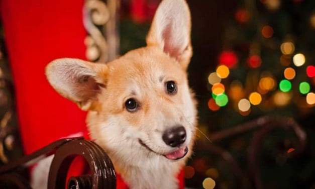 Great Christmas gift ideas for dogs