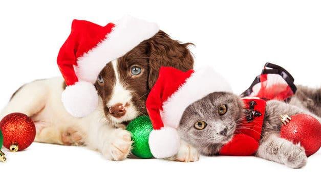 Christmas food and pets warning