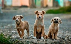 5 Most popular dog topics