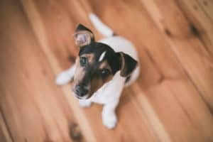 Puppy socialisation and aggression