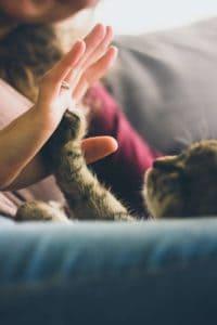 Indoor cats exposed to dangerous chemicals.