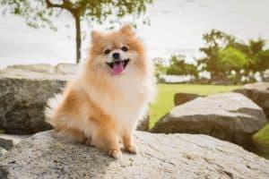 Dog breed groups