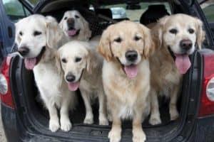 dog theft awareness day