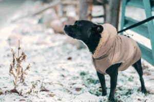 Best tips to keep your dog warm in winter