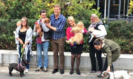 Aussie pets fetch $2 billion in public health care savings