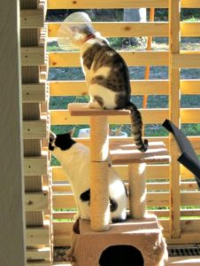 Michaela Lobb shares her ideas for a low-cost catio