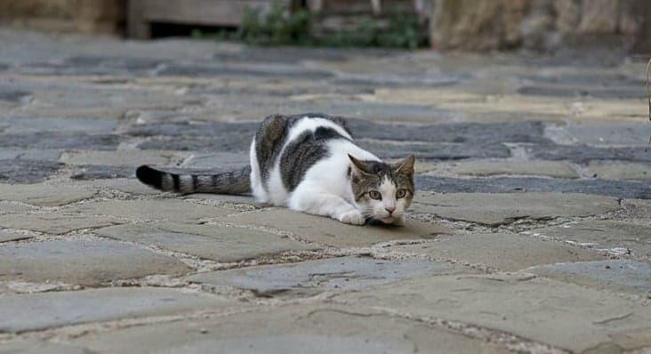 Should you let your cat roam outside?