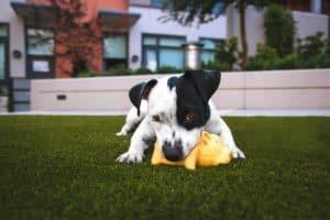 12 ways to celebrate National Dog Day 2017