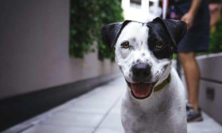 Dog breeder registration laws in Queensland