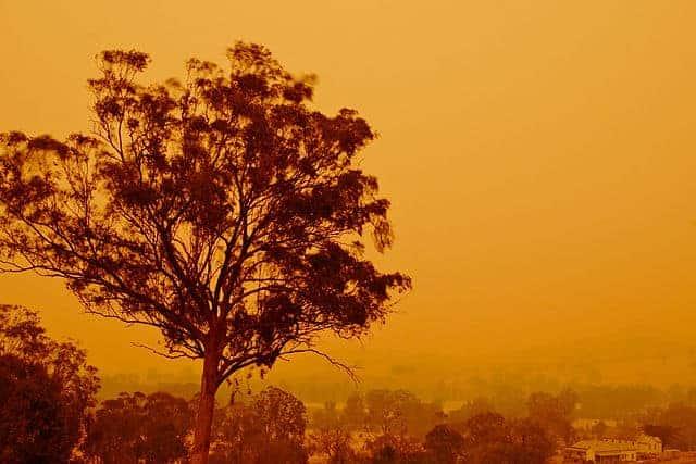 Bushfire safety for pets