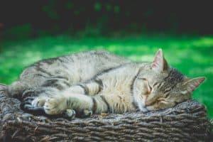 Senior cat behaviour