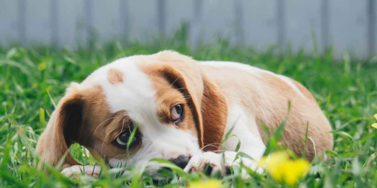 Mental illness in pets