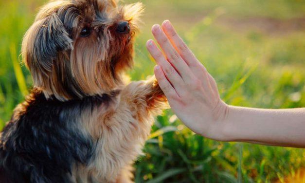 Aversive dog training relate to behaviour problems