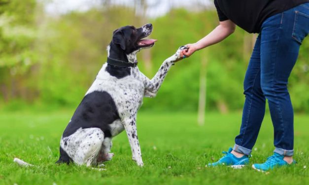 3 common myths in dog training