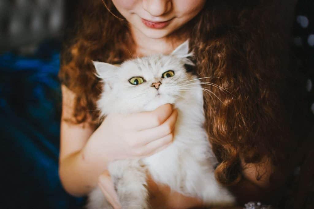 Human-cat relationship