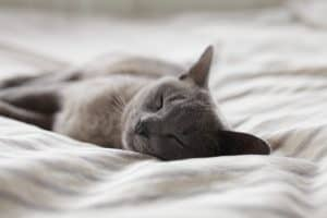 10 tips to keep your cat happy and contented