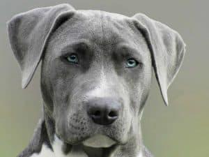 Common diseases in senior dogs