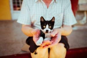 Pets4Life contributors