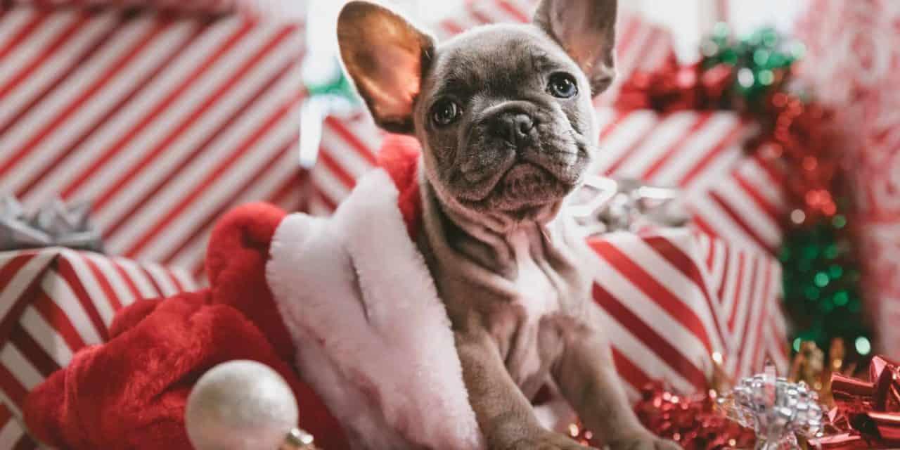 Surviving Christmas and pets, keep everyone happy!