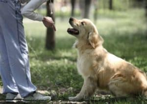 6 benefits of dog training