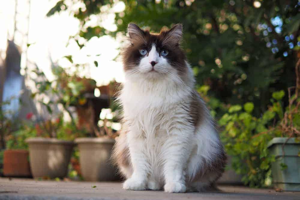 Free Roaming Cat Laws California