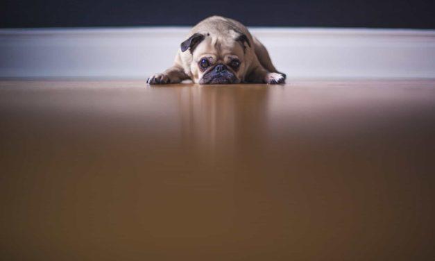 Dr Joanne Righetti ways to reduce pet stress